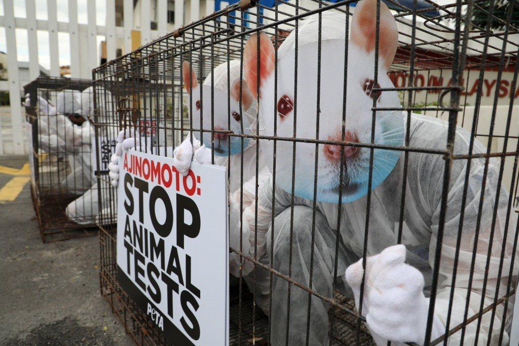 善待動物組織(People for the Ethical Treatment of Animals)抗議食品製造商進行動物實驗。攝於2019年11月28日,吉隆坡。 圖/路透社