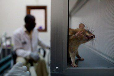 朱增宏/台灣科學研究還在舊時代?「國家動物實驗3R中心」的重要性