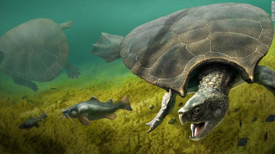 地紋駭龜生存於約5百到1千萬年前,在當時的南美北部湖泊與河流出沒,在非常靠近頸部...