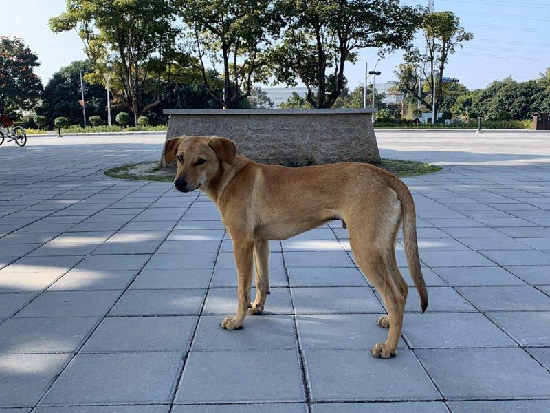 台南山上花園水道博物館的流浪犬,在萬名網友請命下,將再回到園區。圖/水道博物館提供