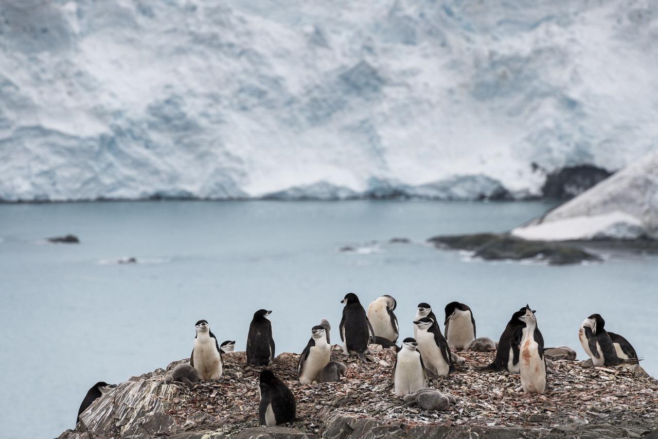 南極出現破紀錄高溫 首度突破攝氏20度