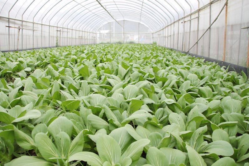 政府大力推廣有機農業,生產端的農民認為遇到瓶頸。圖/聯合報系資料照片