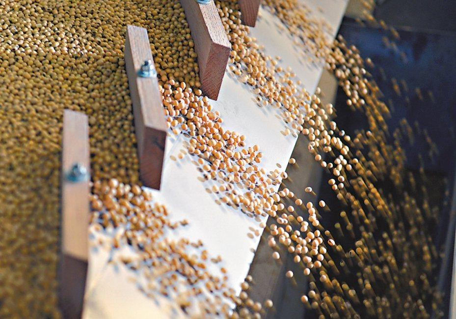 美國對中國的黃豆出口上周跌至近10個月來的最低水準。本報資料照片