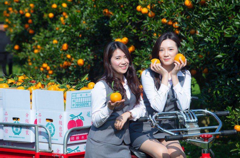 峨眉鄉農會推出宣傳行銷柑桔影片,由農會美女員工群參與影片製作與演出。圖/峨眉鄉農會提供