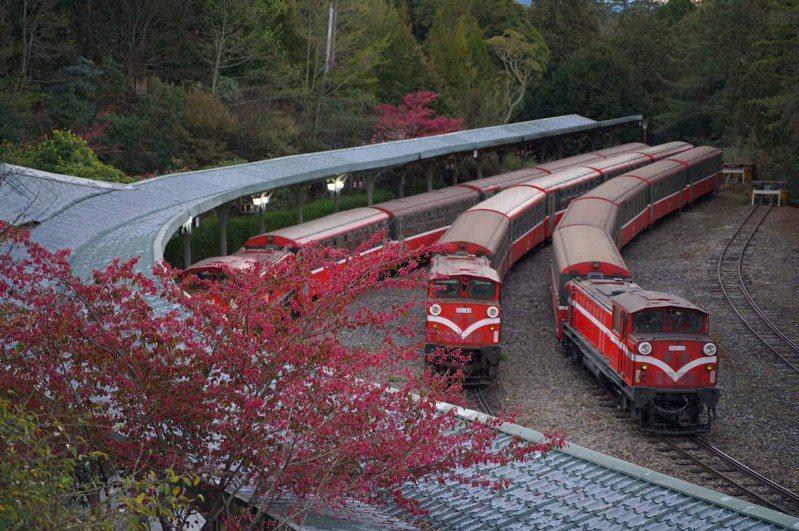 阿里山林業鐵路及文化資產管理處推出今年獨家限定的「綻放 舞櫻」浪漫旅程,遊客將搭乘仿日本皇室貴賓車打造的臺灣檜木車廂,前往阿里山森林遊樂區各賞花秘境。圖/林鐵及文資處提供