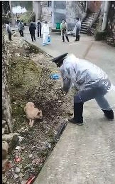 執法人員持木棍入村屠狗。 影片截圖