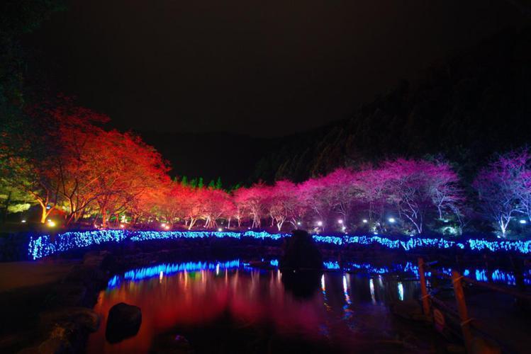 九族夜櫻,也是美麗風景。圖/九族文化村提供