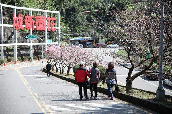 新店往烏來新烏路上的花園新城,沿途也有櫻花花海。圖/新北市景觀處提供