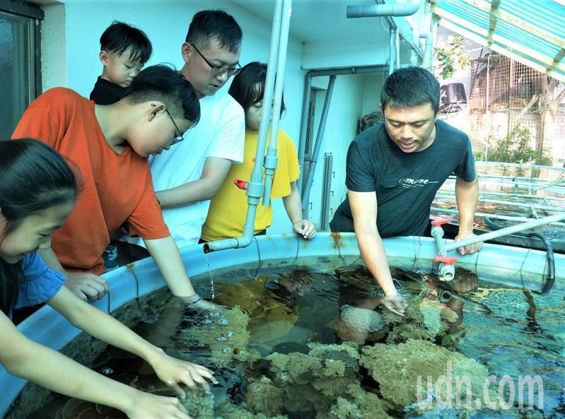 屏東縣佳冬鄉青年養殖戶吳國振上網學如何人工養殖,3年多來從1個水族箱養到4個大水缸,復育10多種台灣本土種珊瑚,並開放參觀,讓這座迷你珊瑚復育站成為海洋生態教育的衛星基地。記者潘欣中/攝影