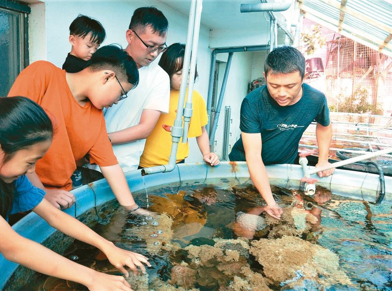 屏東縣佳冬鄉青年養殖戶吳國振(右一)上網學如何人工養殖珊瑚,3年多來復育10多種台灣本土珊瑚,並開放參觀,這座迷你珊瑚復育站成為海洋生態教育的衛星基地。 記者潘欣中/攝影