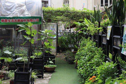 林學賢創立樂農生活志業,推廣頂樓農場。  圖/徐菁攝影