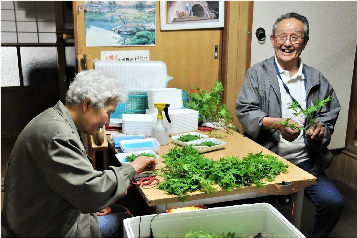 今年高齡90歲的田村利一及其太太(82歲),在上勝町從是賣花葉的工作,一年收入破...