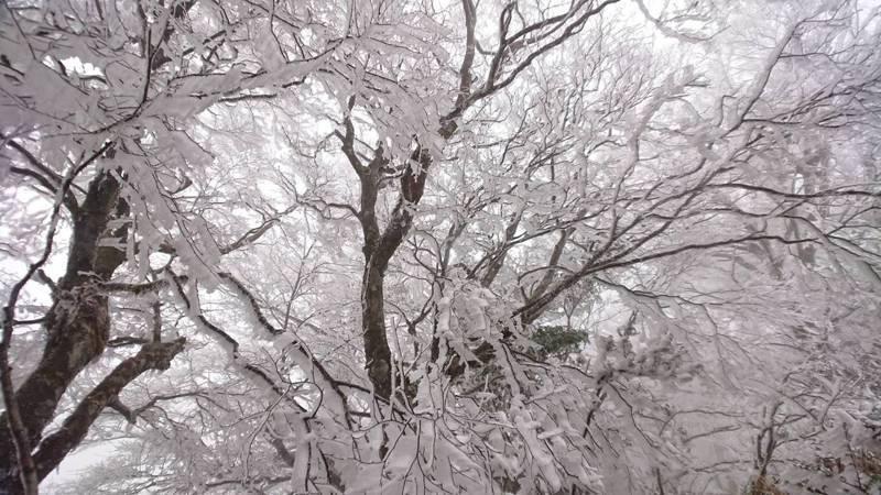 山毛櫸步道已經降雪,見睛步道則是下冰霰,樹枝出現結霜跟霧淞,非常美麗,遊客彷彿走進銀白的童話世界。太平山莊提供