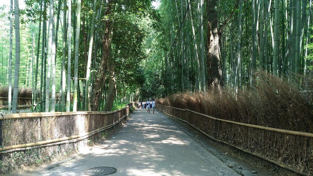 嵐山竹林是京都著名景點。圖/聯合報系資料照片
