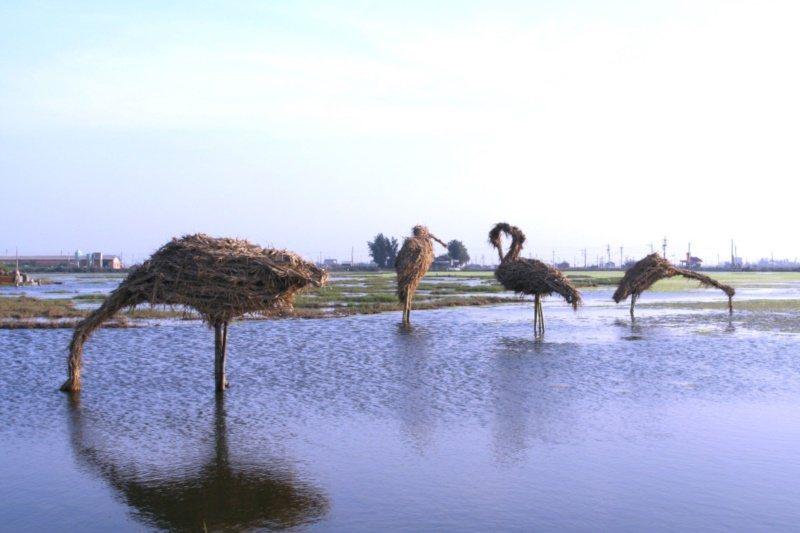 口湖鄉海水倒灌的農田,經村民和觀樹基金會努力,每年引進世界各國藝術家,打造成美麗...