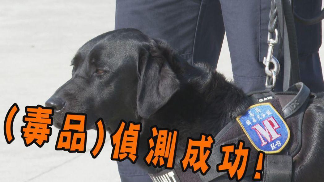 為協助國軍毒品防制,憲兵指揮部士林憲兵隊已在1月1日編成「緝毒犬分組」,今天由全...
