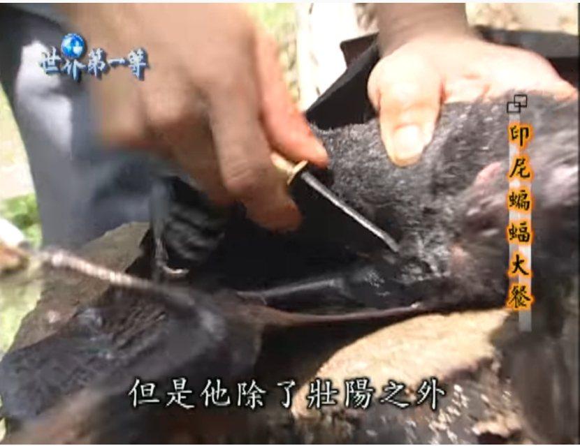 小馬曾在節目中大啖蝙蝠。圖/翻攝自YouTube