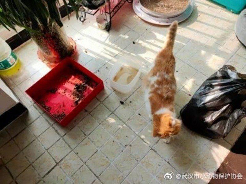 武漢市小動物保護協會的志工在疫情之下辛勤入門餵狗、貓等寵物添水添糧。 圖/取自武...