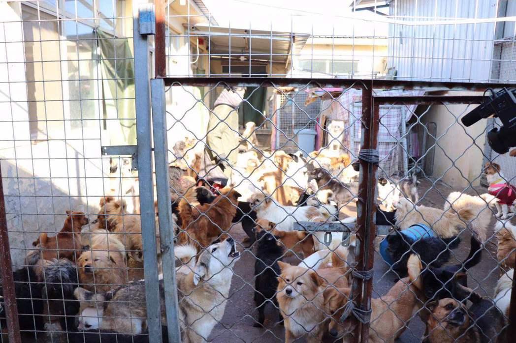 吳狗媽在北京近郊的狗小院。 記者呂佳蓉/攝影
