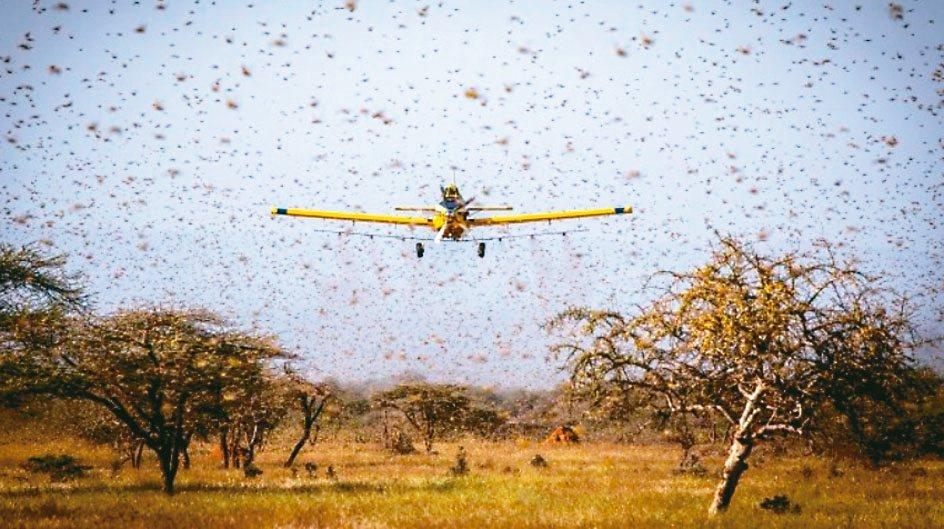 近來東非蝗災肆虐,蝗蟲大軍更逼近中國邊界,對全球食物安全造成嚴重威脅,激勵近期農...