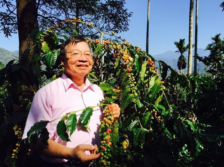 張金堅走在南投縣國姓鄉的咖啡產區裡,仔細觀察咖啡豆的品種。