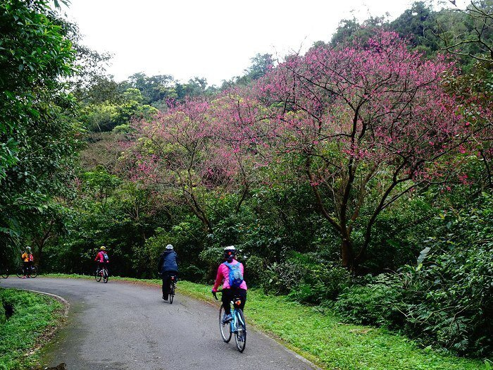 雖然平湖森林遊樂區已荒廢,但園區內的山路依舊維護得當,很適合單車 與步行