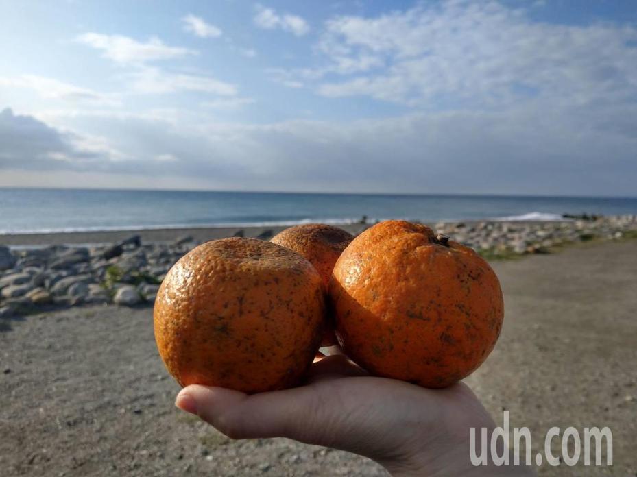 蘭嶼飛魚季期間,千萬不要帶橘子到海邊,因為橘子在當地是罵人和詛咒人意思,會帶來不好的運氣。記者尤聰光/攝影