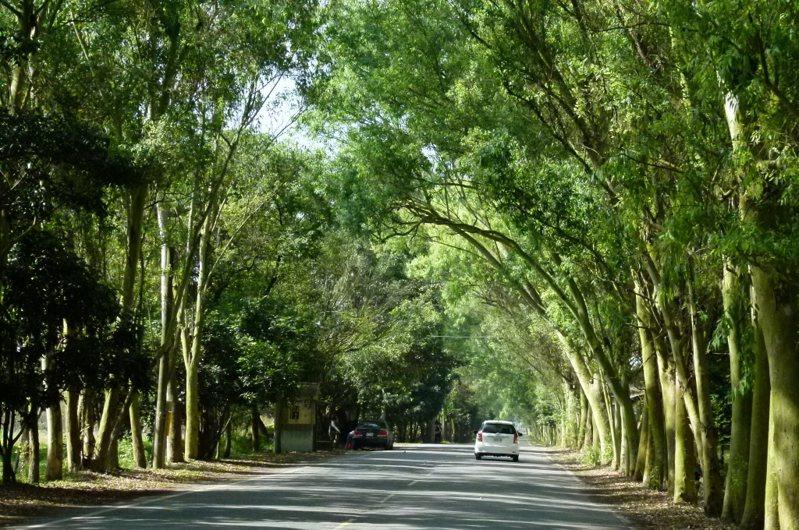 屏東縣沿山公路沿線平地造林風景優美,是大武山腳下最美的一條公路,如今竟因「林相不佳」,將有200公頃轉型為光電園區。本報資料照片/ 記者翁禎霞攝影