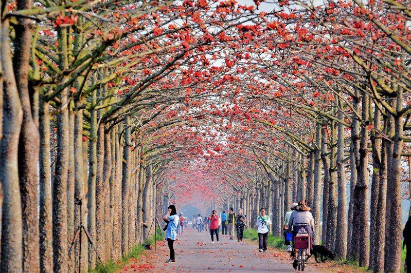 228假期為暖陽春的天氣,各地晴朗穩定,適合出遊踏青。圖為台南市白河林初埤木棉花季。記者吳淑玲/攝影