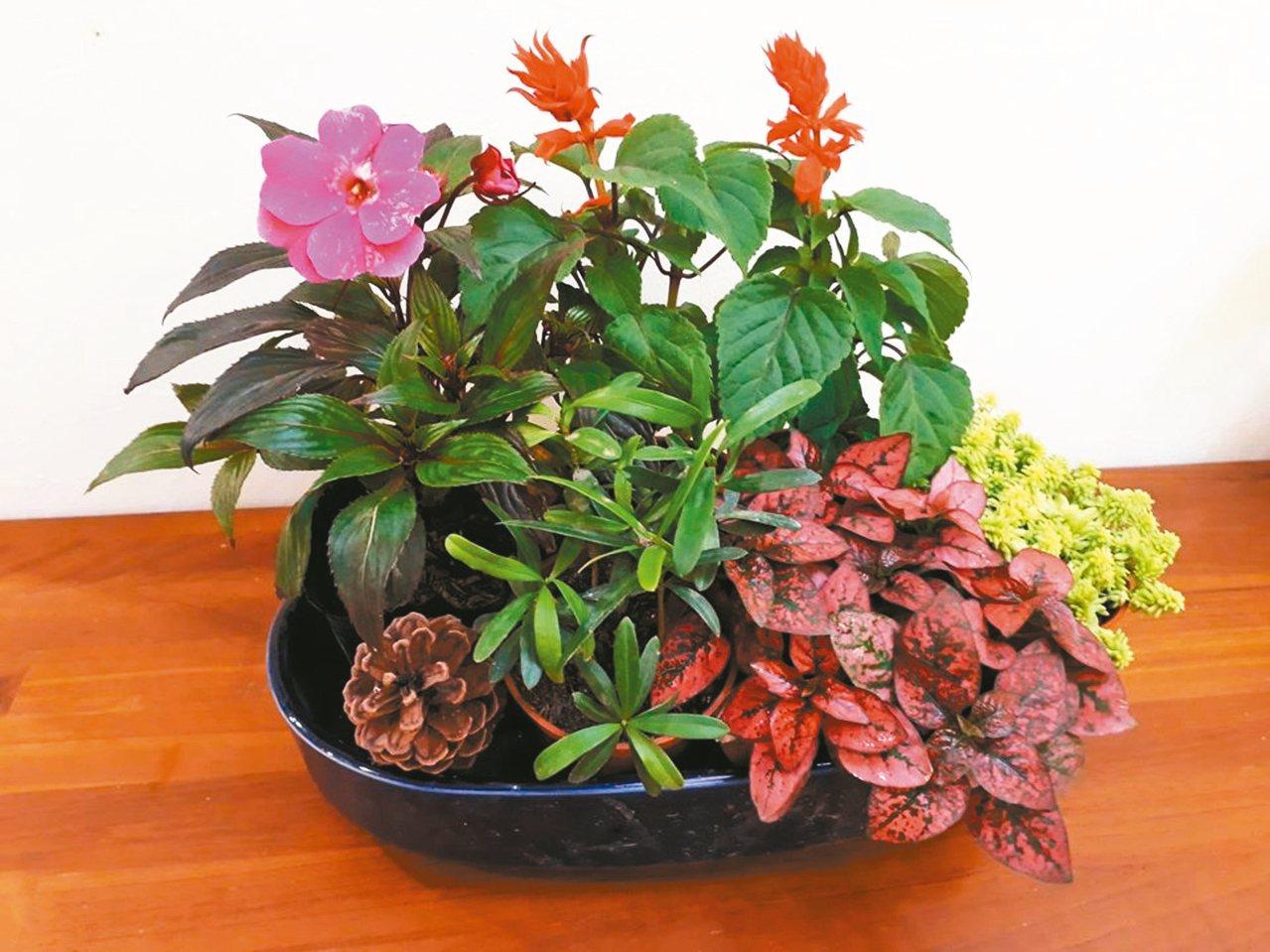 用現有花器,家中小盆栽,再搭配毬果、樹枝,組合成高貴不貴的盆栽。 圖/張桂瓊提供