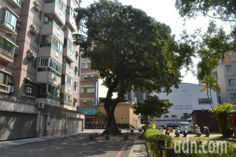 台南東區府東創意森林旁巷子中央有棵老榕樹,人車都要讓路。記者鄭惠仁/攝影