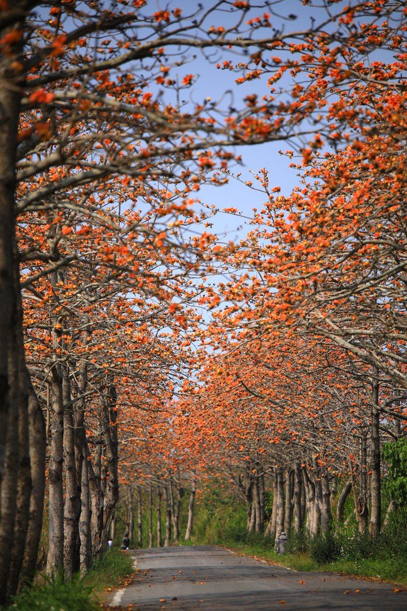 二林木棉花道盛開時美景。圖/許展嘉提供