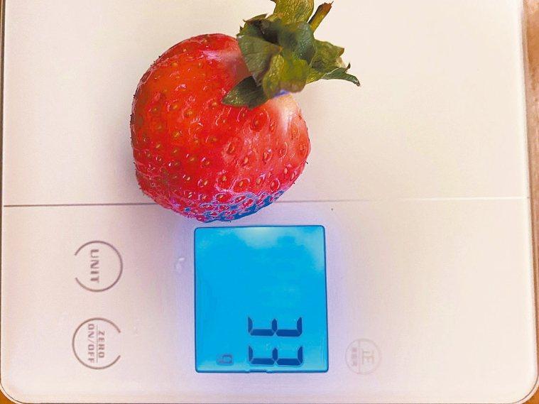 每顆草莓都在30克以上 圖╱朱慧芳