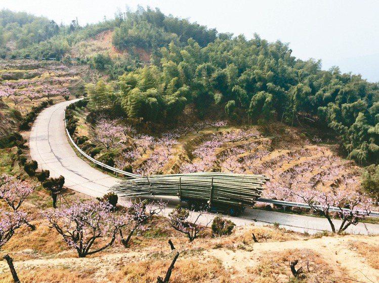 凌宗湧就地取材,借卡車到杭州富春山居後山找花材。 圖/CN Flower提供