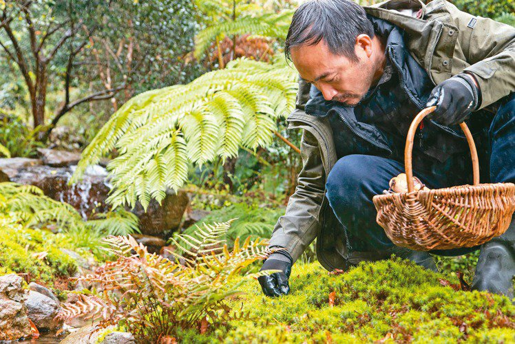 凌宗湧要弄一個苔的庭院。 陳立凱/攝影