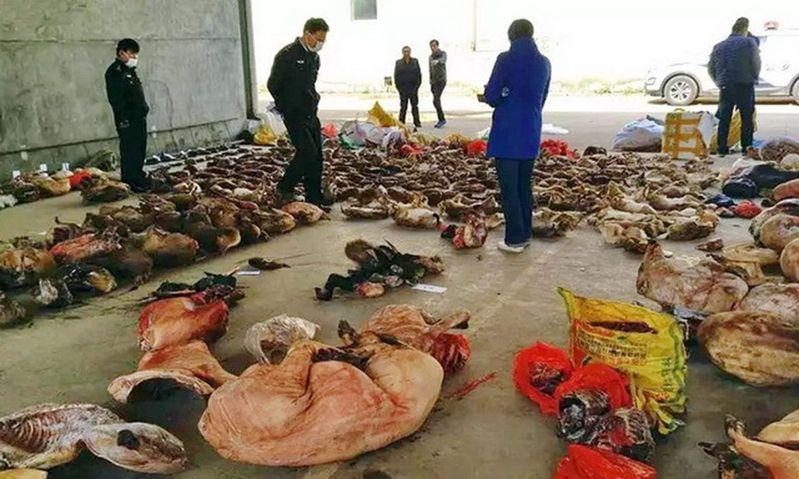 人大常委會決嚴打濫食野味。圖為江西破獲販賣野生動物案現場。 圖/取材自一財網/森林公安提供