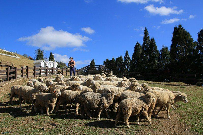 清境農場聯手日月潭教師會館,推出破盤優惠。圖/清境農場提供