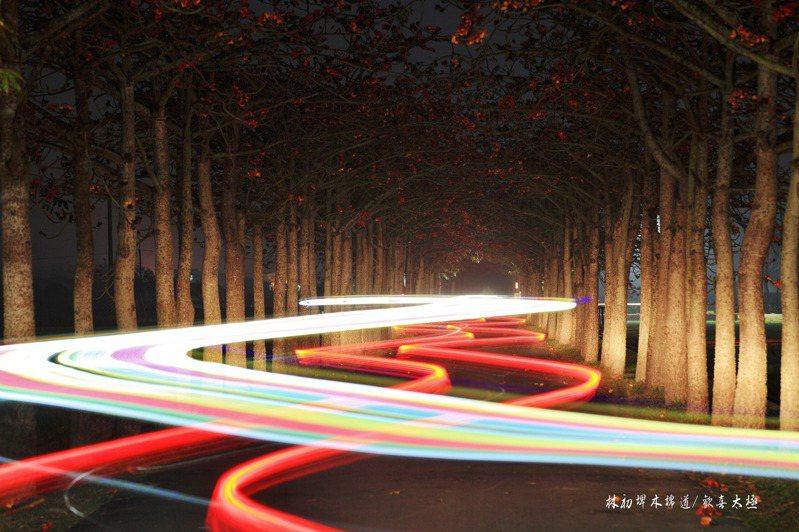 嘉義縣退休員警、業餘攝影師王輝松,今天清晨到白河林初埤木棉花道,拍下如虹彩繞行的木棉花道車軌燈照片,讓網友驚嘆「太漂亮了!」圖/王輝松提供