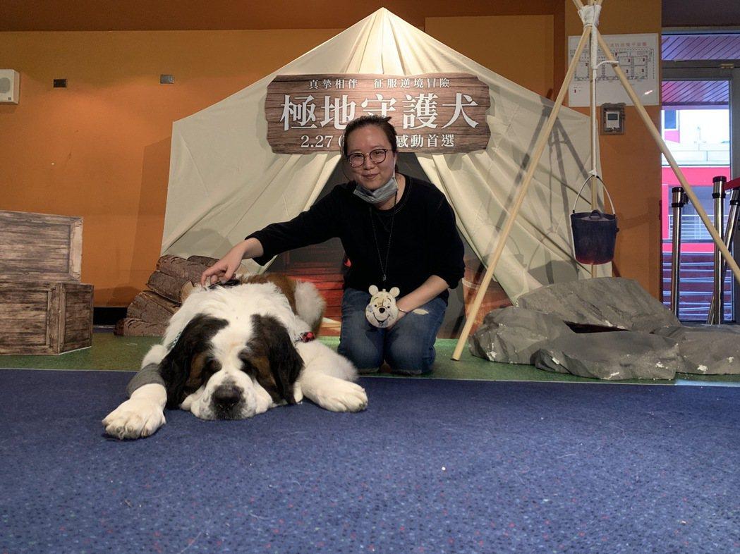 聖波納犬現身「極地守護犬」粉絲特映會。圖/迪士尼提供
