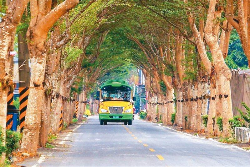 高市美濃庄頭巴士平日穿梭在鄉間小路上,行經龍肚綠色隧道的畫面最經典,有龍貓公車稱號。 圖/取自臉書看見美濃之美