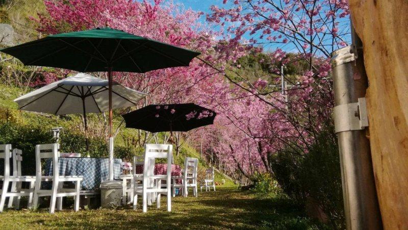 二馬山莊即使不入住也可以喝咖啡賞櫻。 圖/桃園市政府觀光旅遊局提供