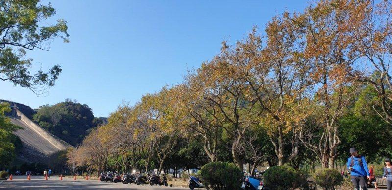 石車水庫南苑停車場成排的楓樹和由下往上看壩頂有不同的感受。 圖/鄭國樑 攝影