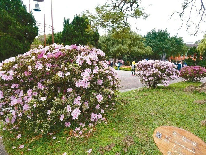 台大杜鵑花節是台大春季盛典。 圖/台大提供