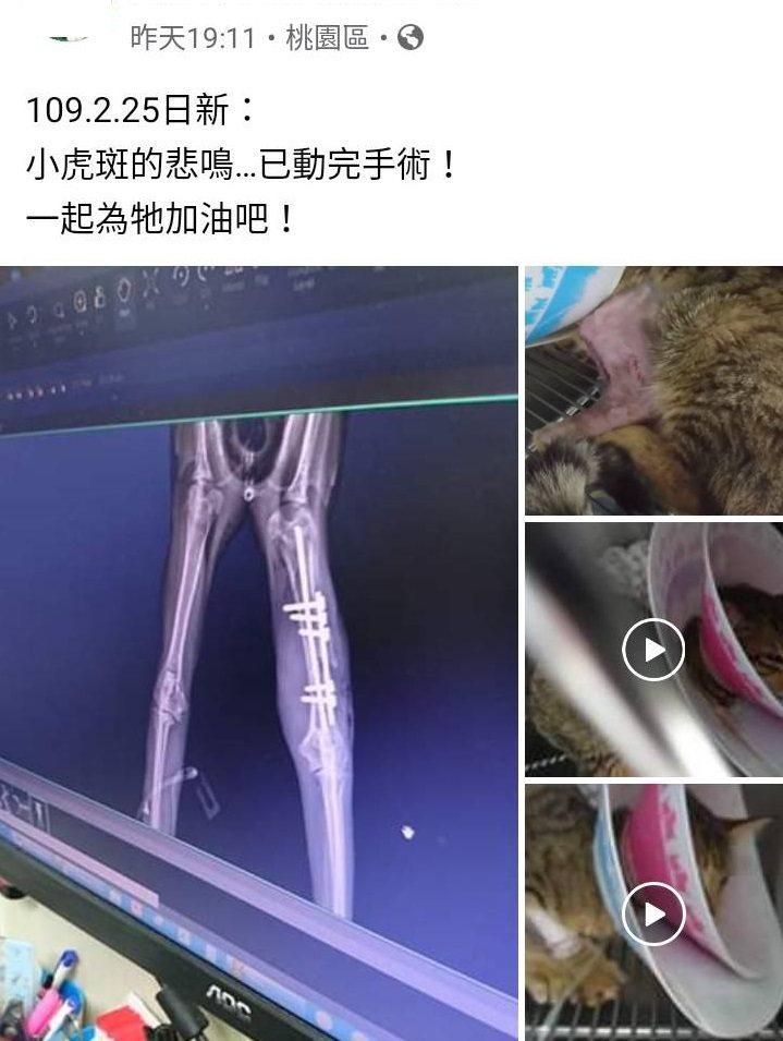 疑似受虐的貓腿骨骨折,被救出後送動物醫院手術。圖/桃園市議員黃敬平服務處提供