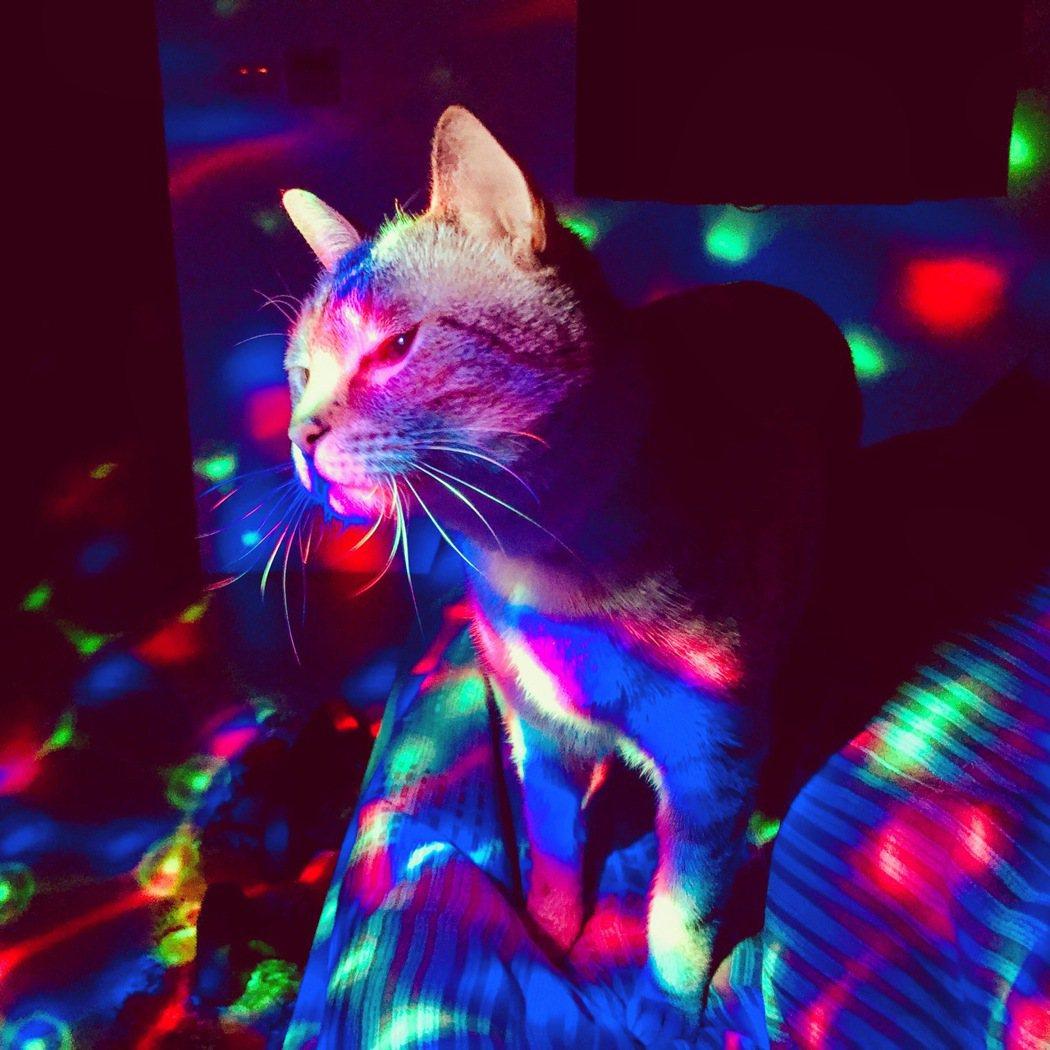 貓兒神秘敏感多變。 (鐘聖雄/提供)