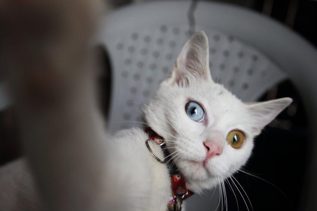 貓:有事嗎? (鐘聖雄/提供)