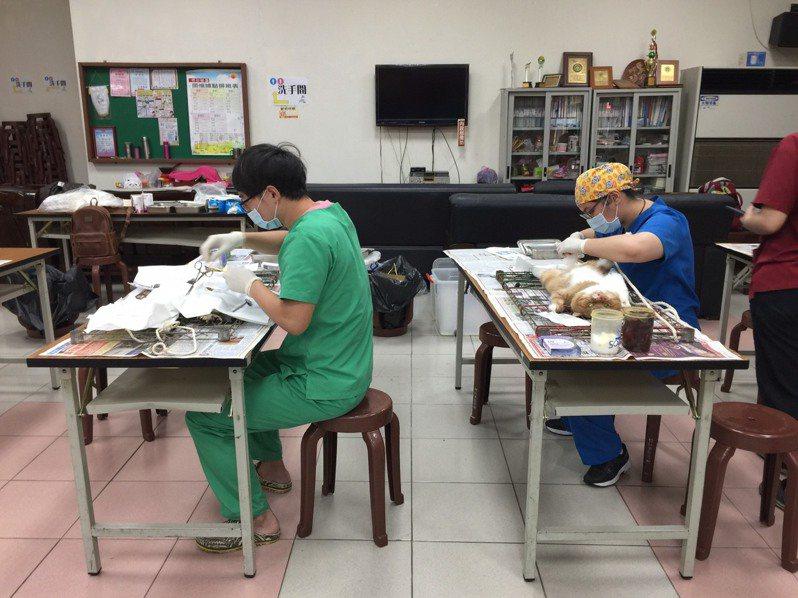 為鼓勵飼主為家中犬貓完成絕育手術,新竹縣家畜疾病防治所與縣內8家動物醫院合作,受自即日起辦理犬貓絕育補助活動。記者陳斯穎/攝影