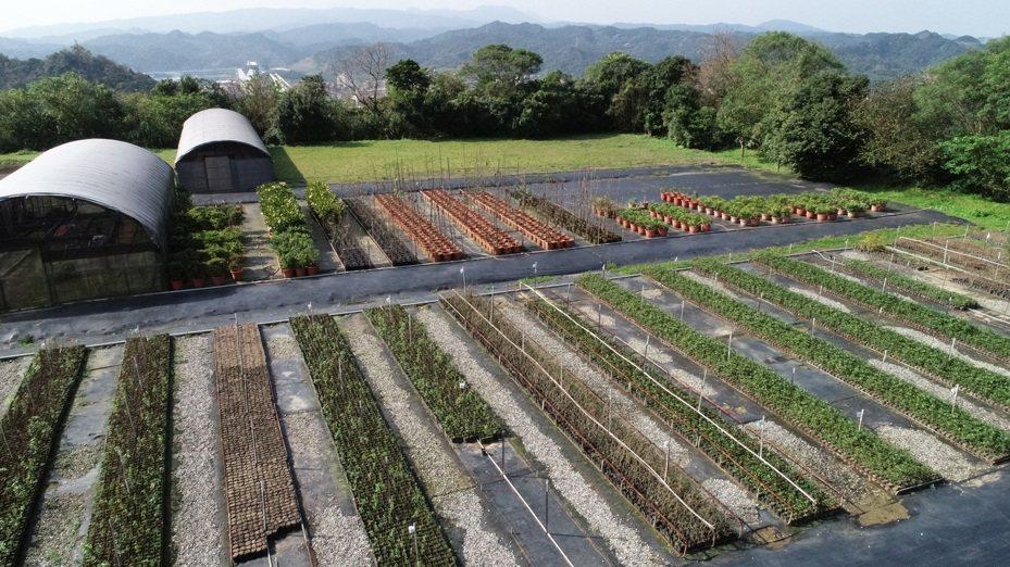 3張發票換1株,基隆七堵苗圃將送5千株樹苗、花苗。圖/基隆市政府提供