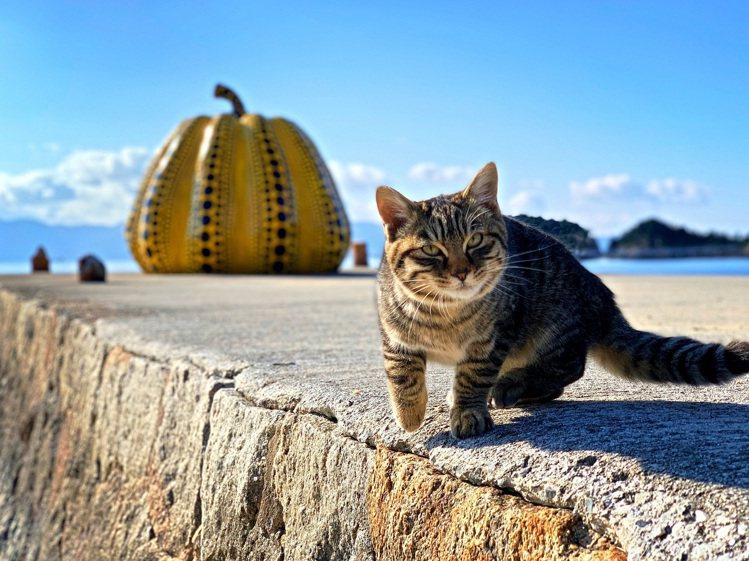 手機攝影師Erica Wu作品「世界貓旅」。圖/新光三越提供