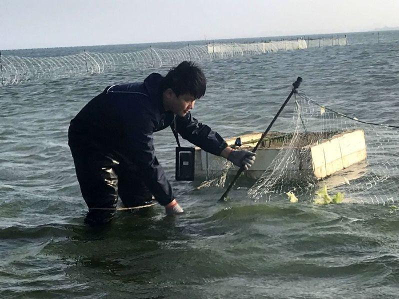澎湖縣農漁局拆除非法設置的立竿網。圖/澎湖縣政府提供